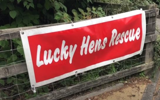 Sign for lucky hen rescue