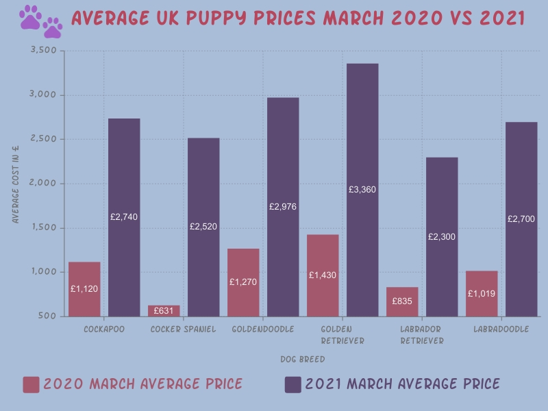 A bar chart showing how assistance dog average puppy prices soared from March 2020 to March 2021. Including the assistance dog breeds: Cockapoos, Cocker Spaniels, Goldendoodles, Golden Retrievers, Labradors and Labradoodles