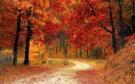 a path through a forest of trees with red leaves
